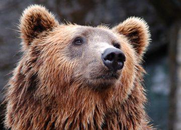 A bear woke up in his den